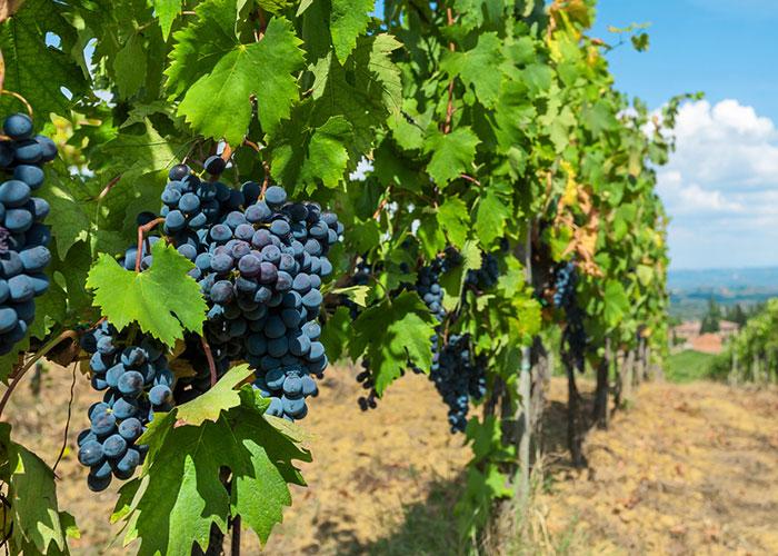 Producteur de vin à Grenoble